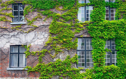 trồng cây xanh